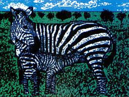 """""""Zebra"""" by Juan J. Samper"""
